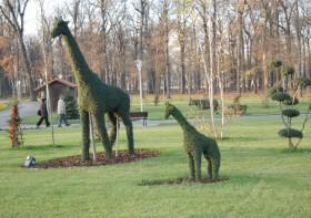 Parcul Tineretului1